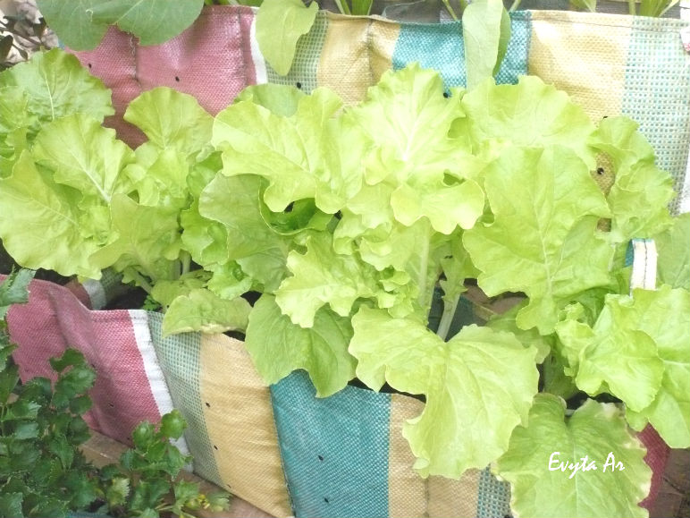 Urban Farming – Tanam Sendiri Makananmu